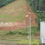 """Dừng trồng """"cỏ lạ"""" trên đường cao tốc Nội Bài- Lào Cai từ tháng 6/2012 - ảnh 1"""